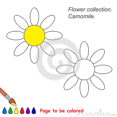 Camomile coloring #3, Download drawings