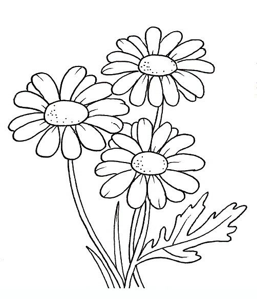 Chamomile coloring #17, Download drawings