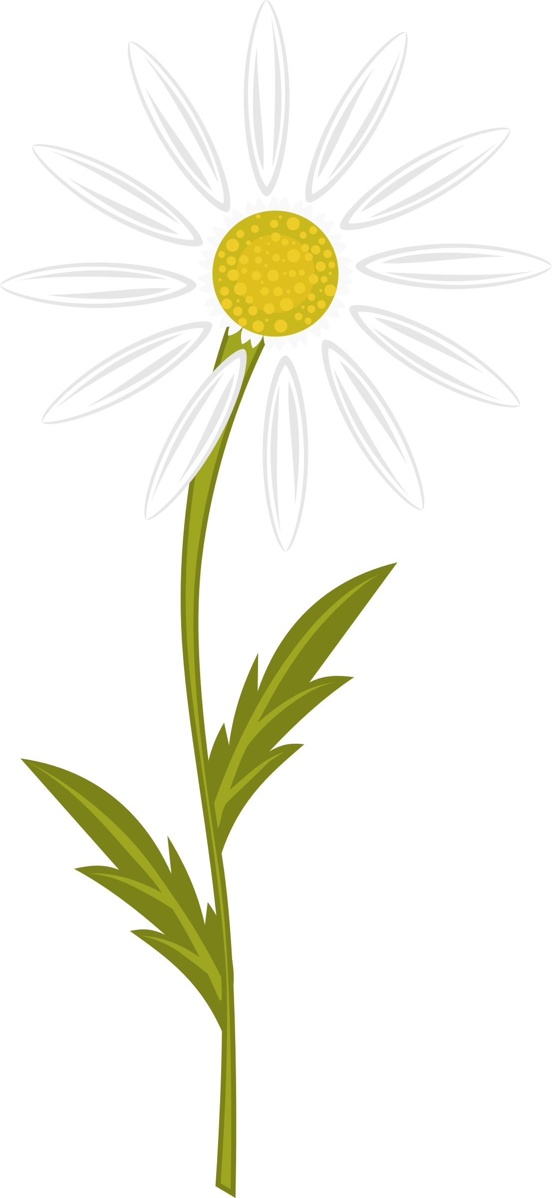 Camomile svg #15, Download drawings