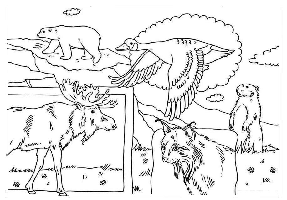 Canada coloring #7, Download drawings