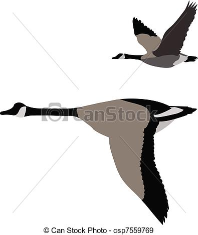 Canada Goose clipart #19, Download drawings
