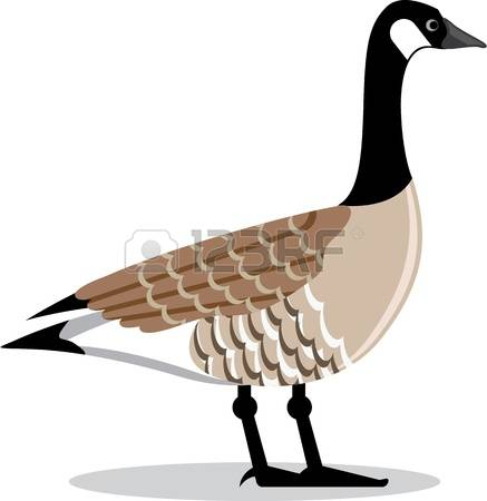 Canada Goose clipart #13, Download drawings