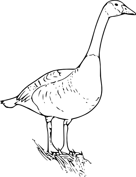 Canada Goose clipart #18, Download drawings