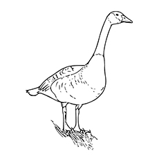 Pink-footed Goose coloring #20, Download drawings