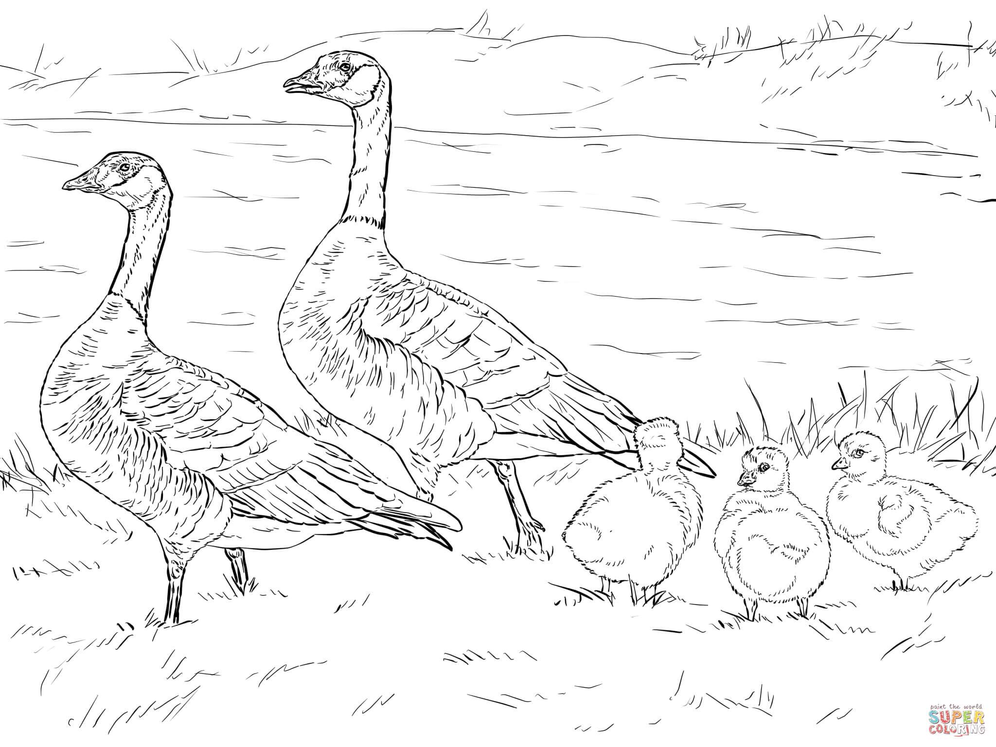 Canada Goose coloring #18, Download drawings