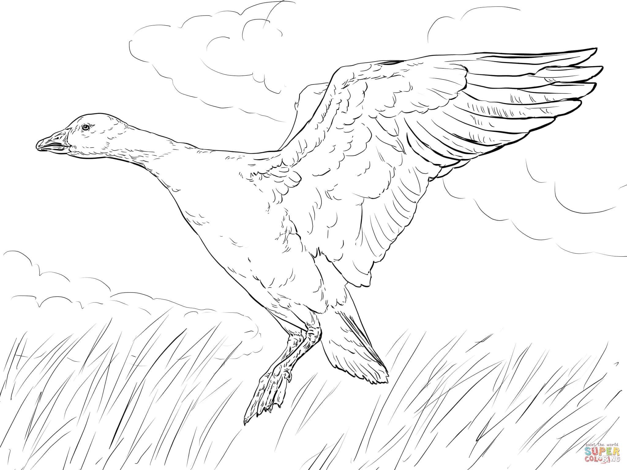 Whooper Swan coloring #10, Download drawings