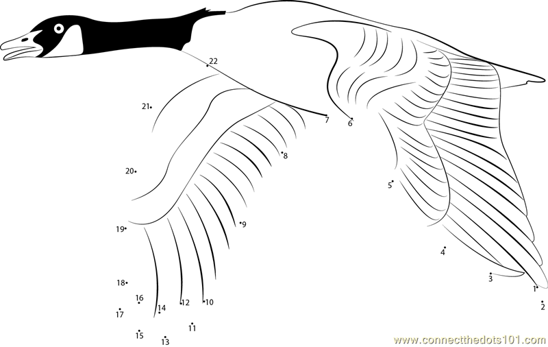 Geese Migration coloring #9, Download drawings