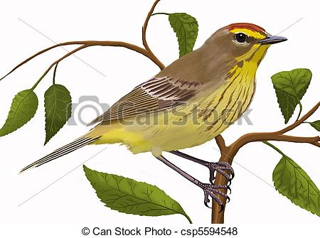 Canada Warbler clipart #13, Download drawings