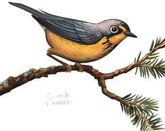 Canada Warbler clipart #10, Download drawings