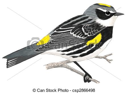 Canada Warbler clipart #11, Download drawings