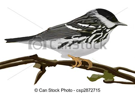 Canada Warbler clipart #7, Download drawings