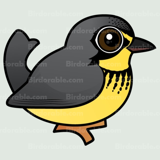 Canada Warbler clipart #15, Download drawings