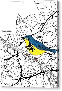 Canada Warbler coloring #3, Download drawings