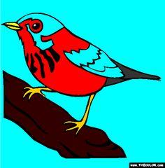 Canada Warbler coloring #16, Download drawings