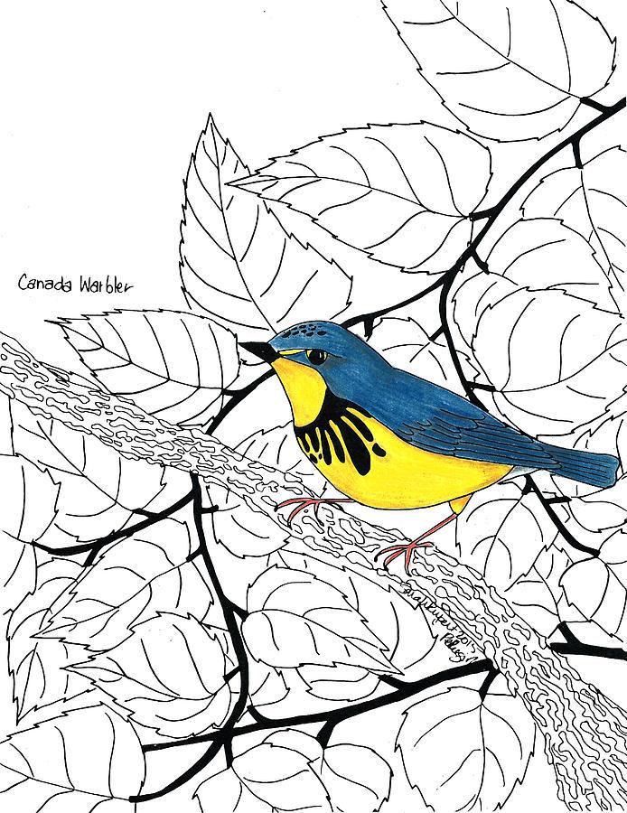 Canada Warbler coloring #6, Download drawings
