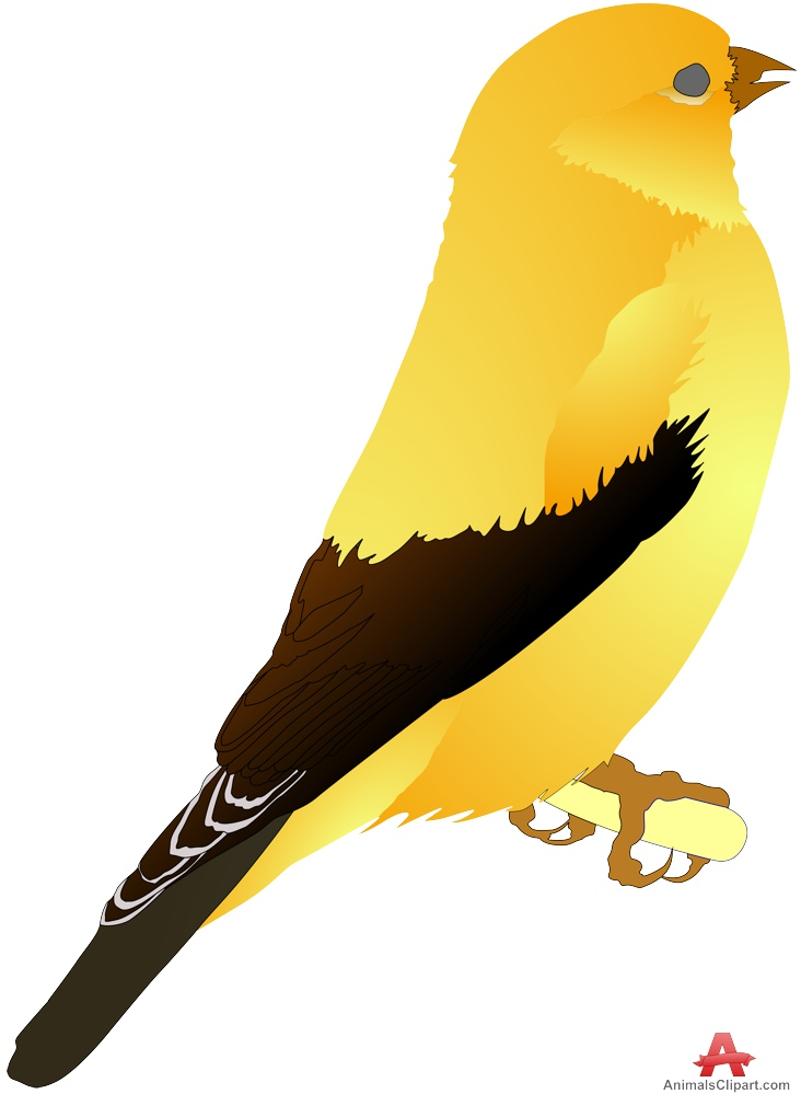 Canary clipart #5, Download drawings