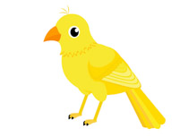 Canary clipart #14, Download drawings