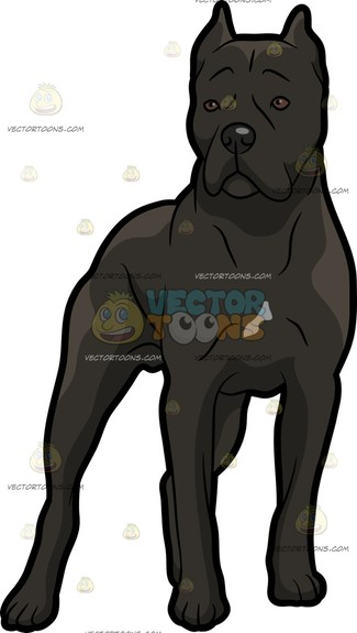 Cane Corso clipart #14, Download drawings