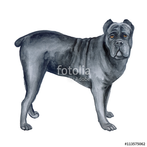 Cane Corso clipart #13, Download drawings