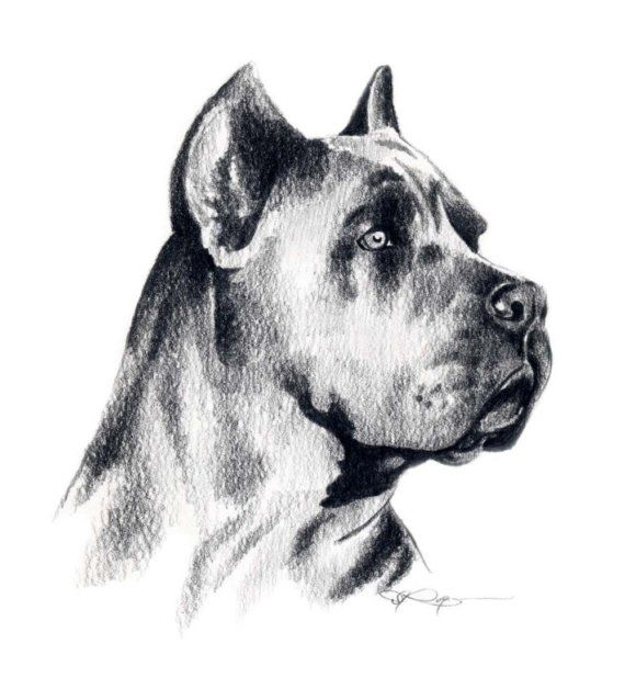 Cane Corso clipart #8, Download drawings