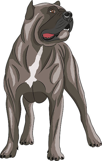 Cane Corso clipart #6, Download drawings