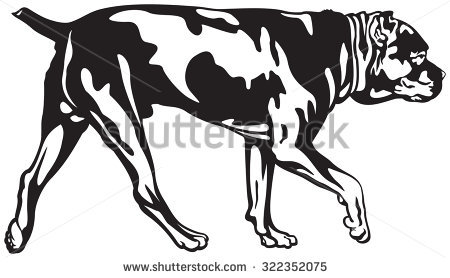 Cane Corso clipart #5, Download drawings