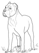 Cane Corso coloring #15, Download drawings