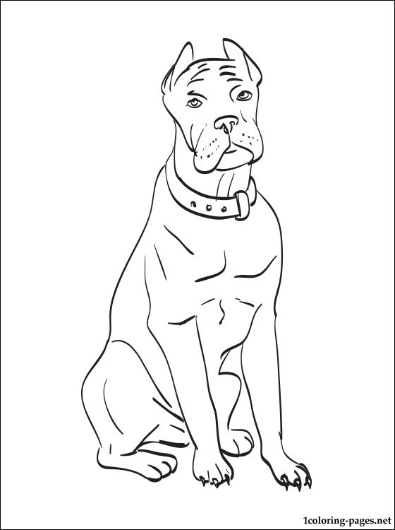 Cane Corso coloring #5, Download drawings