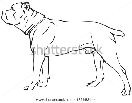 Cane Corso coloring #4, Download drawings