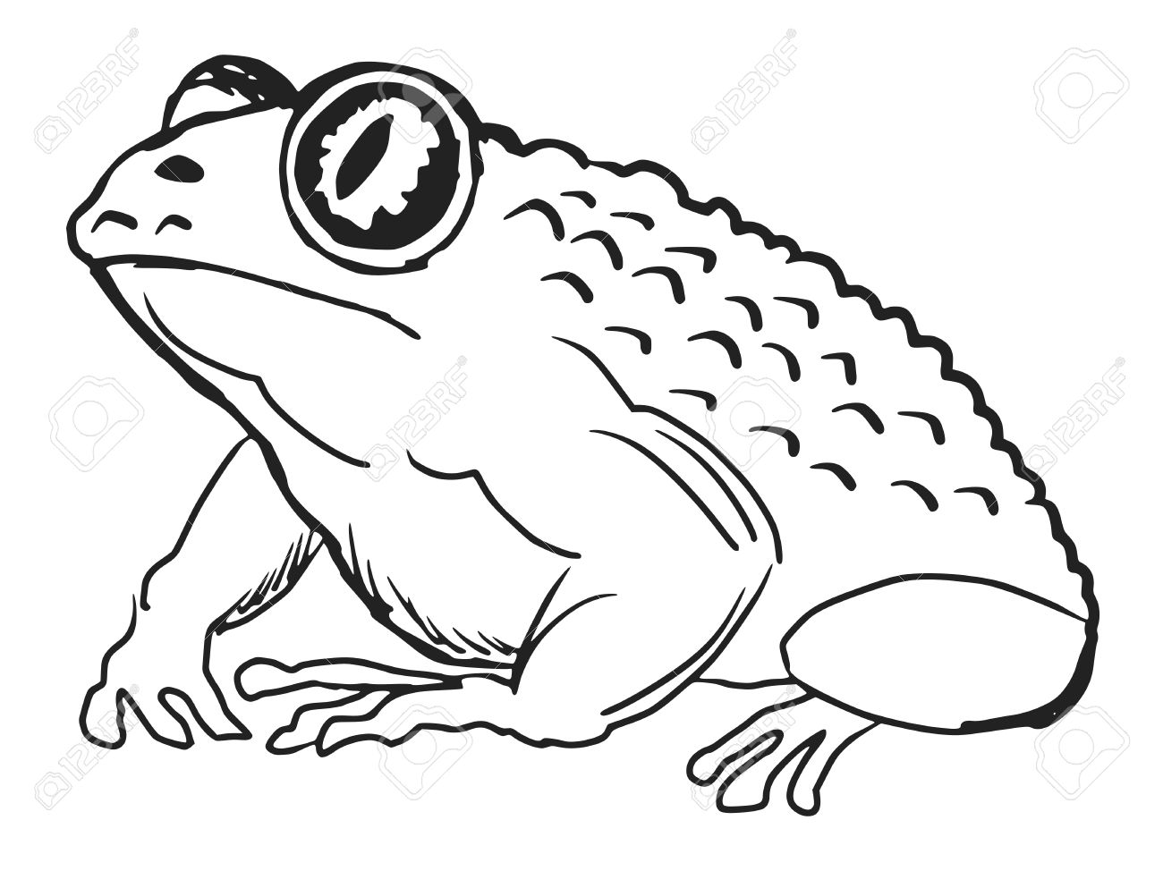 Cane Toad clipart #9, Download drawings