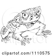 Cane Toad clipart #7, Download drawings