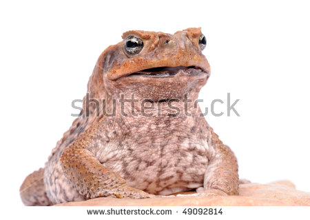 Cane Toad clipart #6, Download drawings