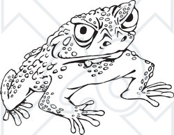 Cane Toad clipart #2, Download drawings