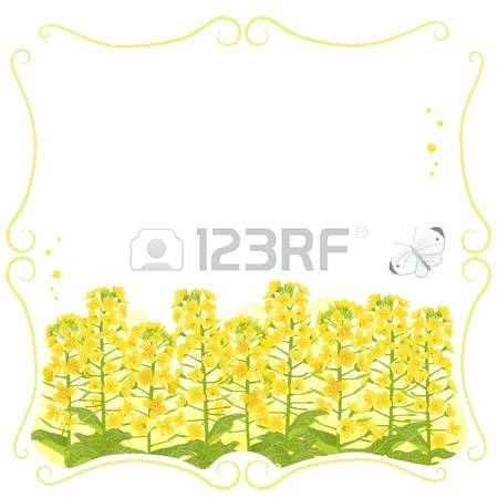 Canola clipart #10, Download drawings