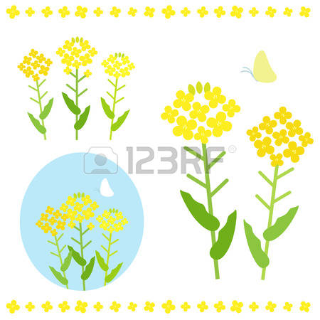 Canola clipart #9, Download drawings