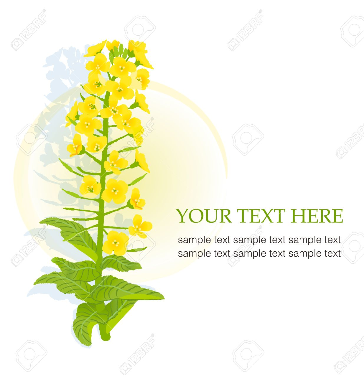 Canola clipart #4, Download drawings