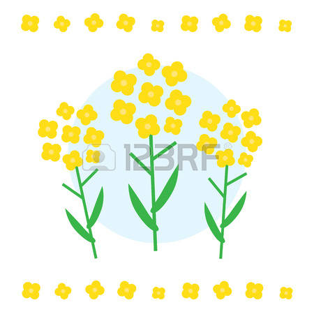 Canola clipart #2, Download drawings