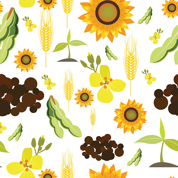 Canola clipart #7, Download drawings