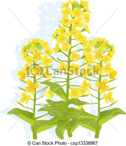Canola clipart #18, Download drawings