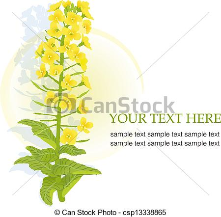 Canola clipart #13, Download drawings