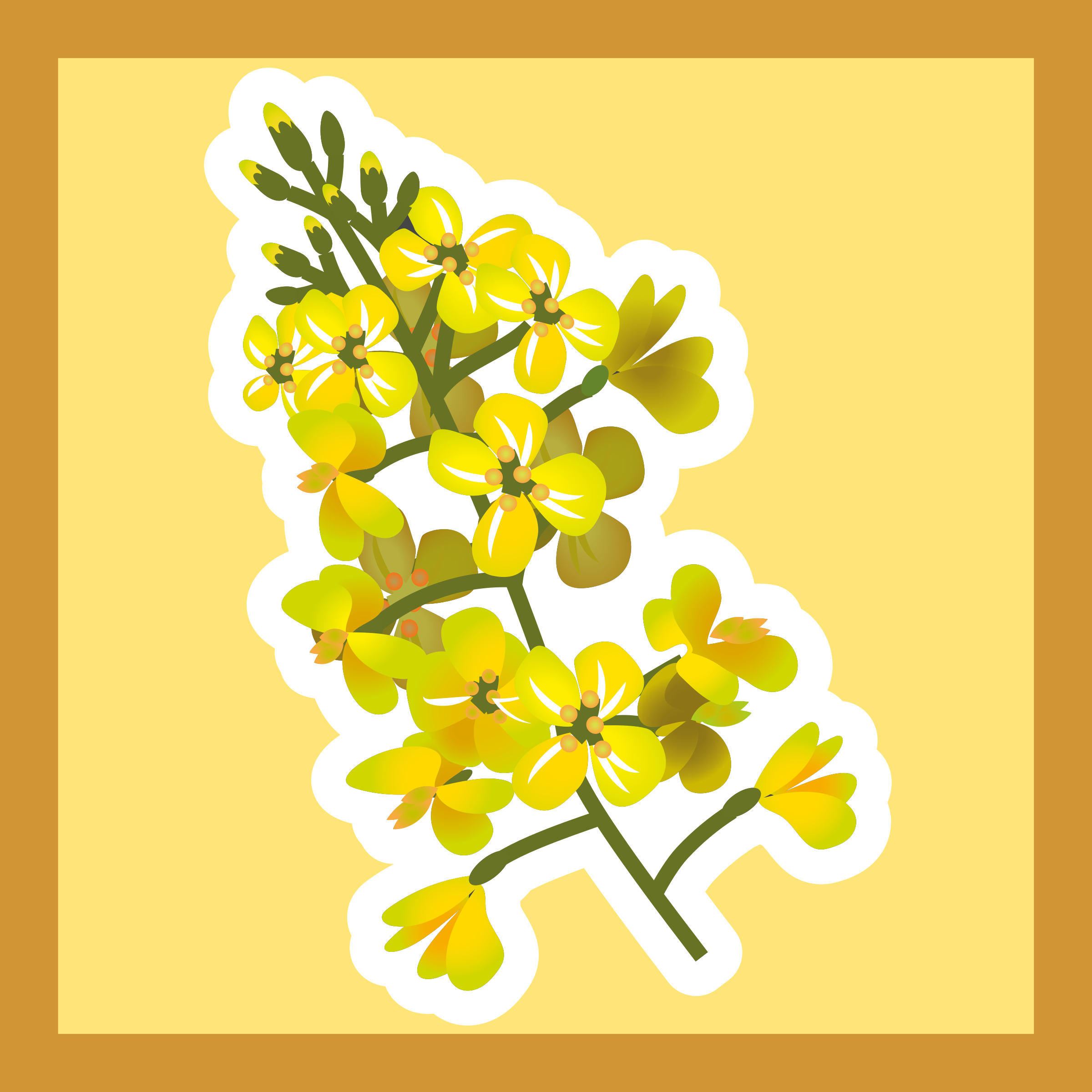 Canola clipart #5, Download drawings