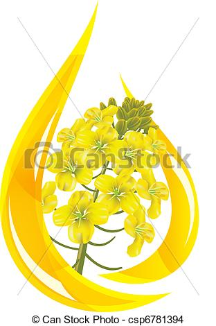 Canola clipart #1, Download drawings