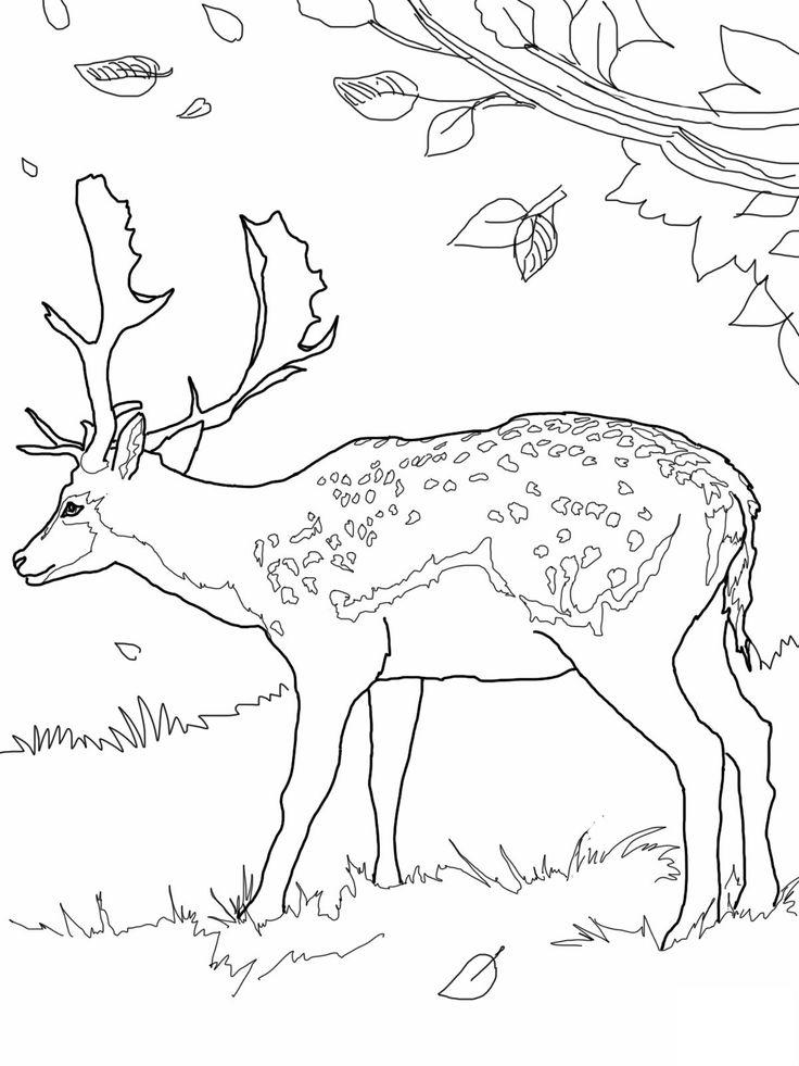 Cape Breton coloring #5, Download drawings