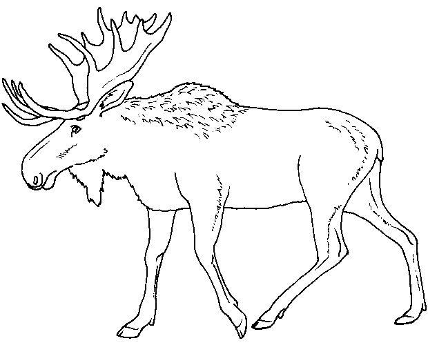 Cape Breton coloring #4, Download drawings