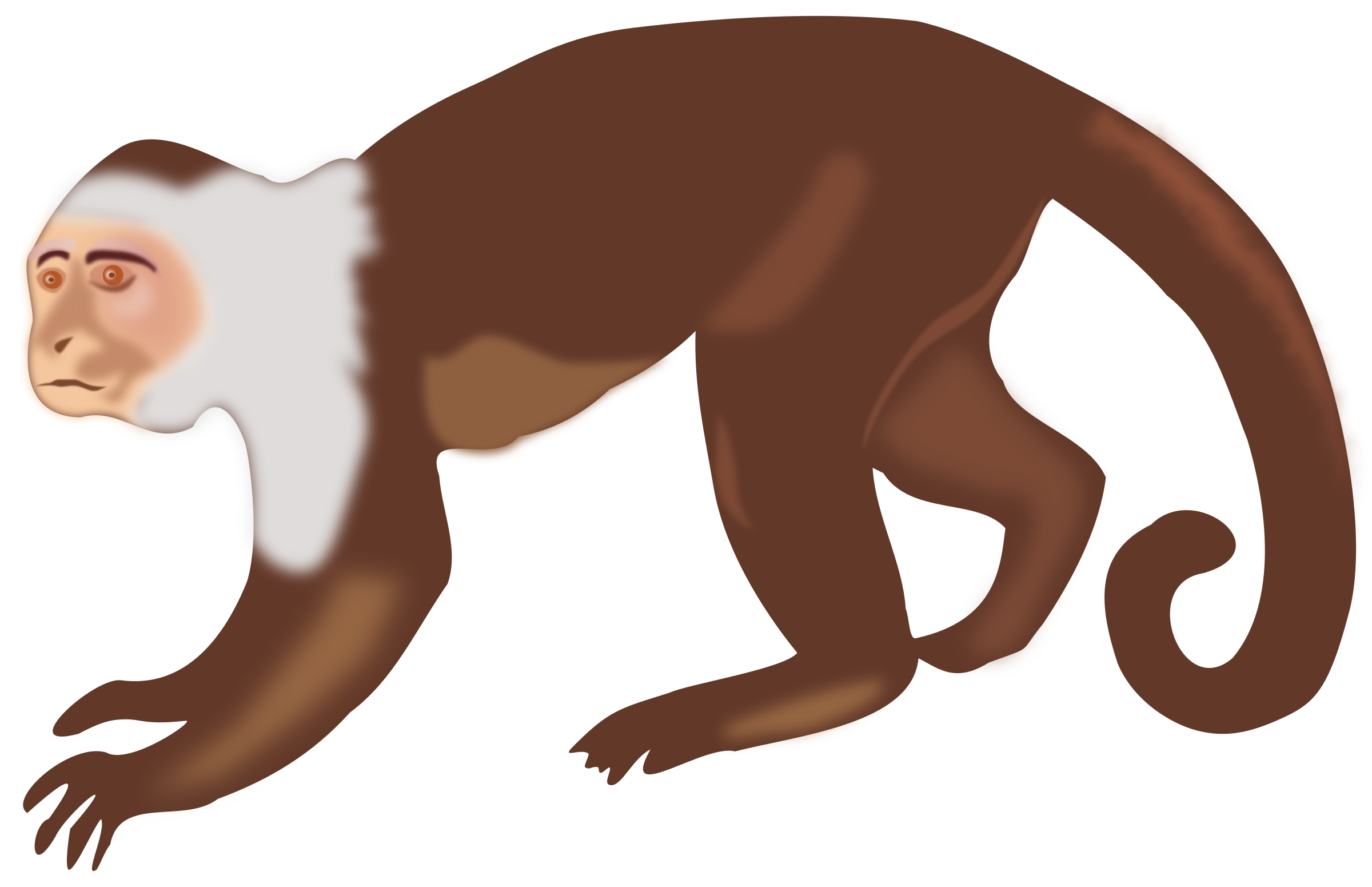 Capuchin clipart #14, Download drawings