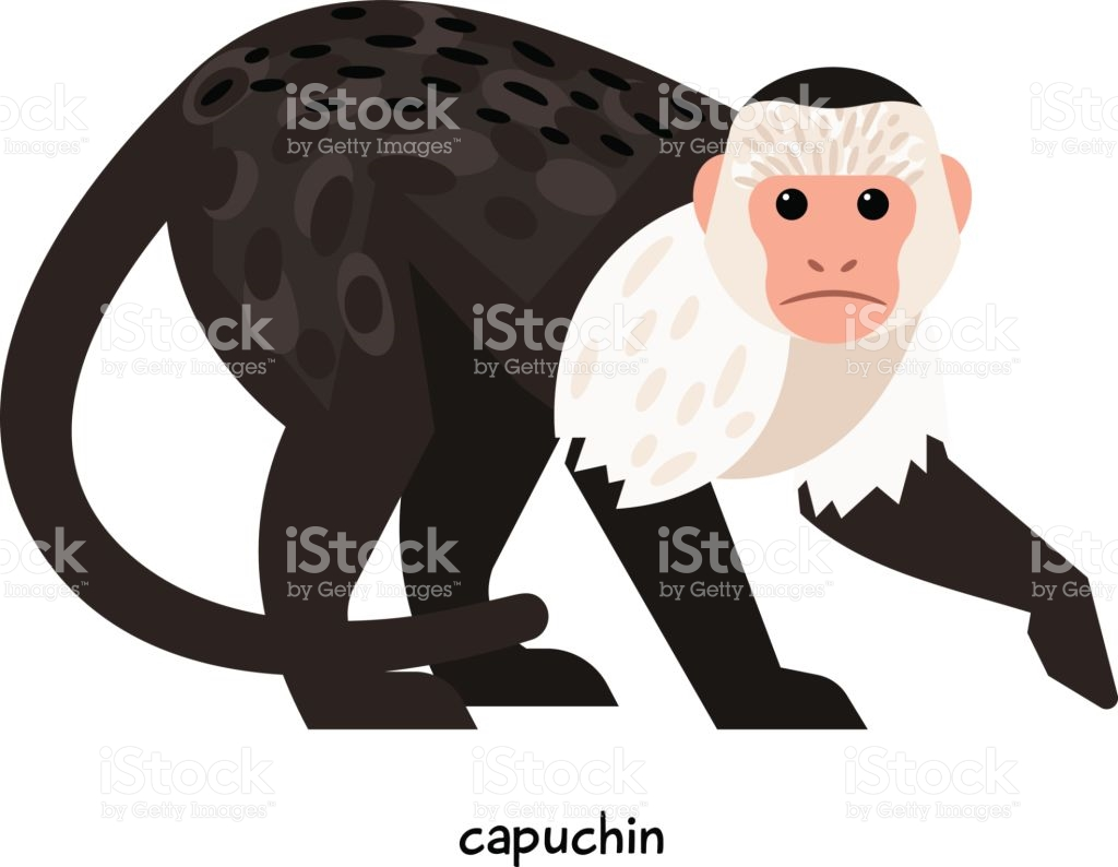 Capuchin clipart #13, Download drawings