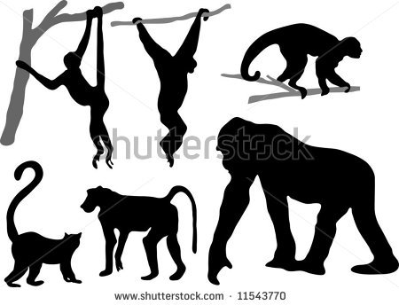 Capuchin clipart #10, Download drawings