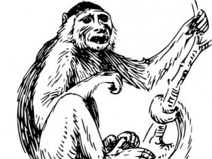 Capuchin clipart #4, Download drawings