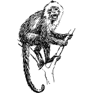 Capuchin clipart #7, Download drawings