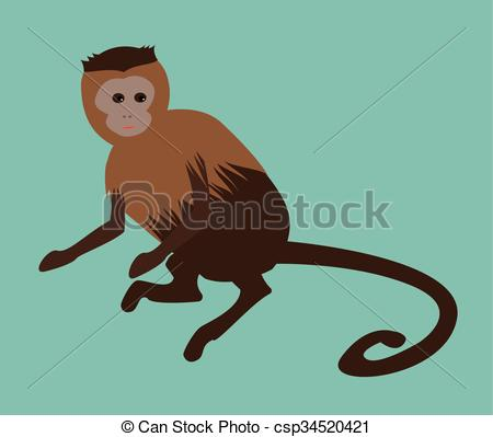 Capuchin clipart #19, Download drawings